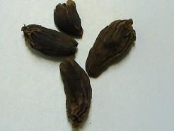 cardamom, black (whole)