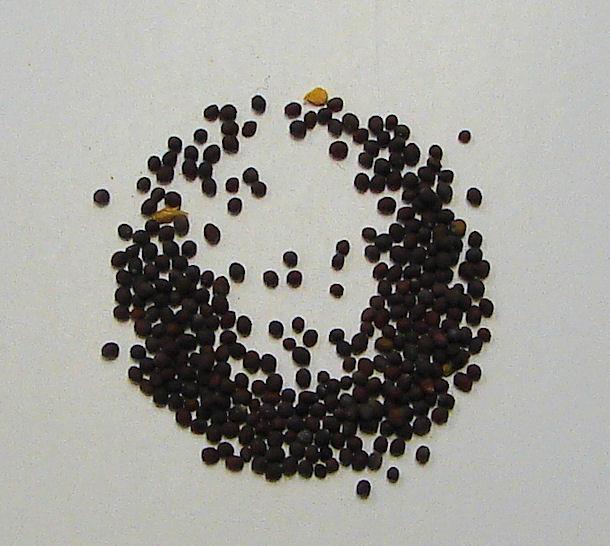 brown mustard seed, organic, (whole)