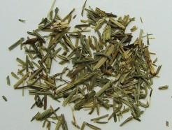 horsetail grass (c/s)