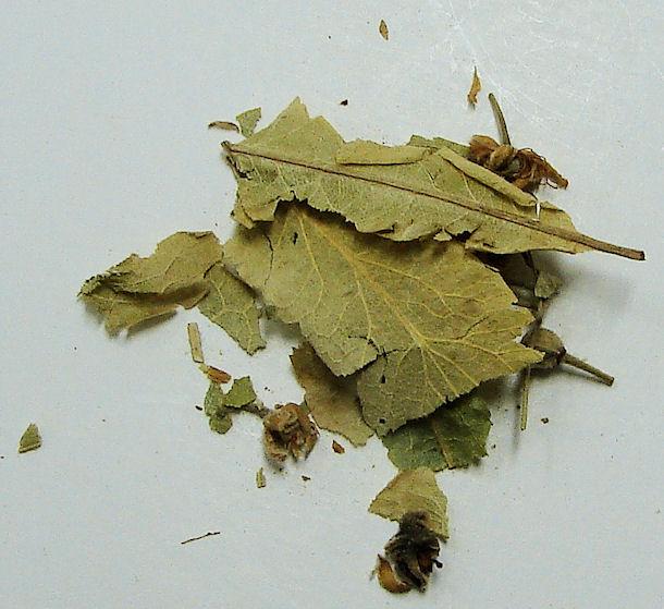 linden flower/leaf (c/s)