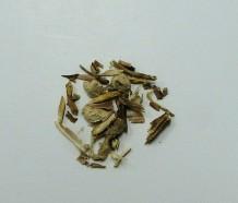sarsaparilla root (c/s)