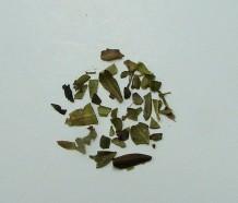 uva ursi (c/s)